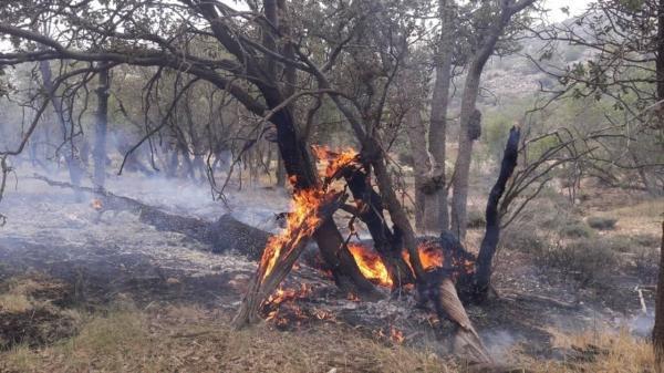 آتش سوزی در جنگل های روستای دشمن زیاری ممسنی